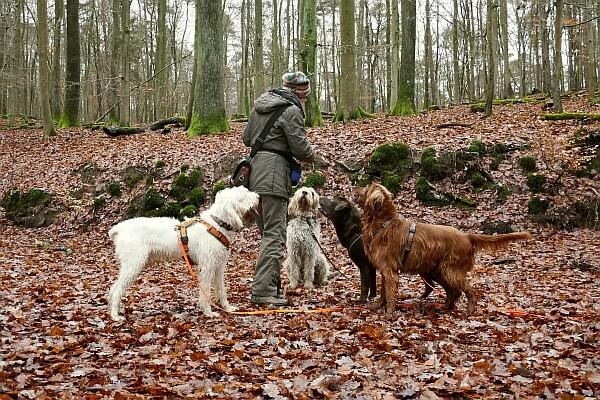 Hundeschule Heike Daniel Mehrhundehalter