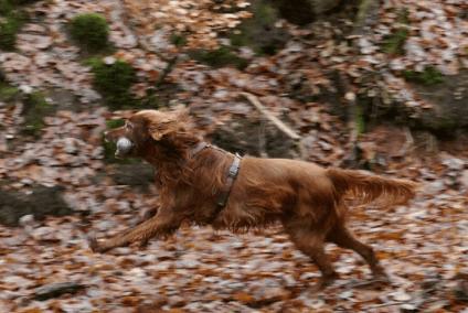 Beschäftigung in der Hundeschule Heike Daniel