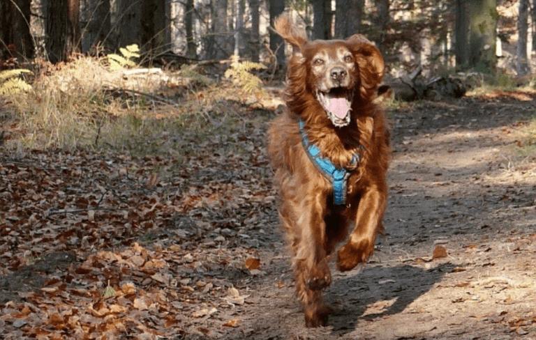 Hundeschule Heike Daniel - Wochenplan