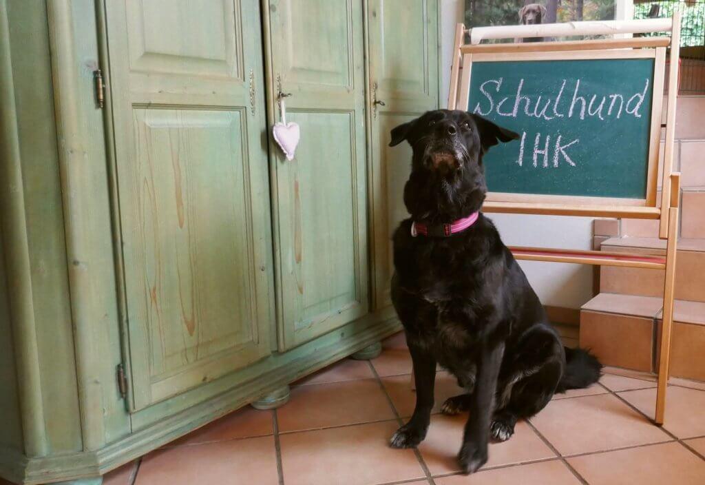 Schulhund Dakota